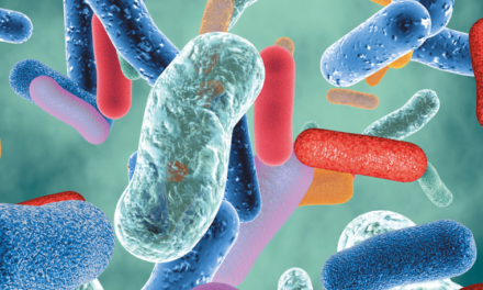 gut microbiota  and human health