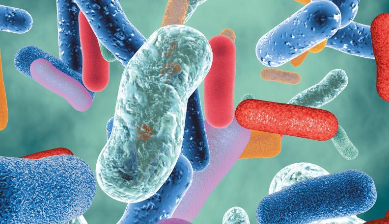 gut microbiota  and human health